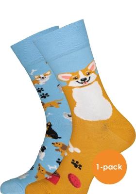 Many Mornings sokken Playful Dog